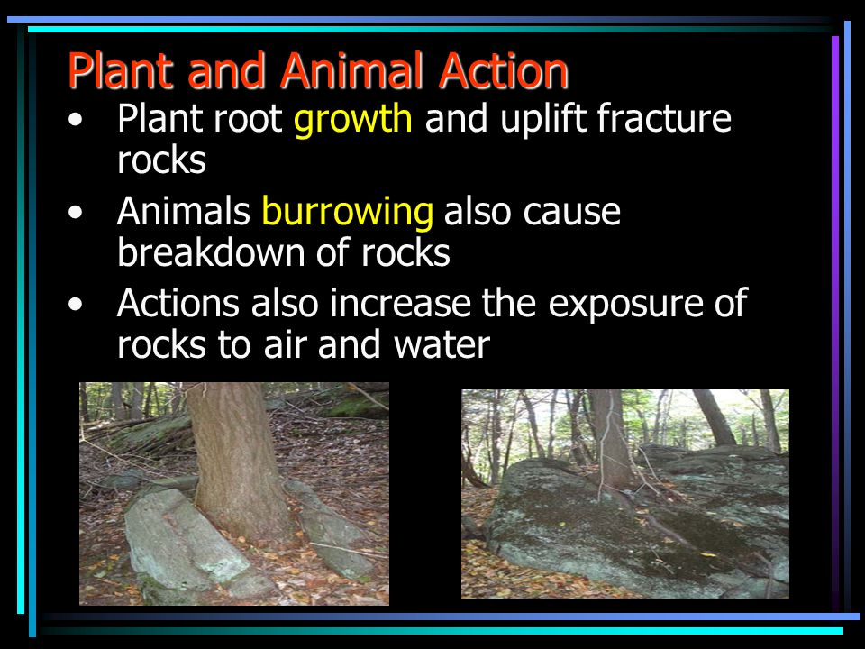 Plant and Animal Action