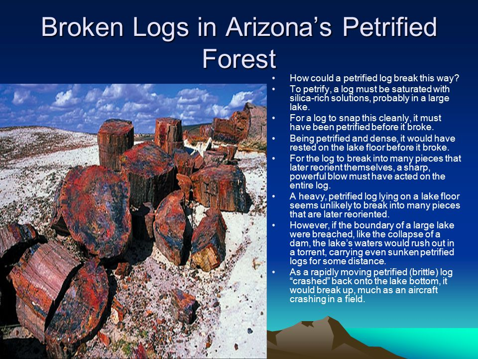 Broken Logs in Arizona's Petrified Forest