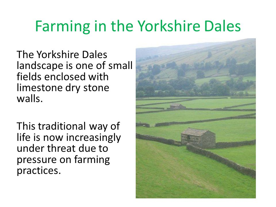 Farming in the Yorkshire Dales