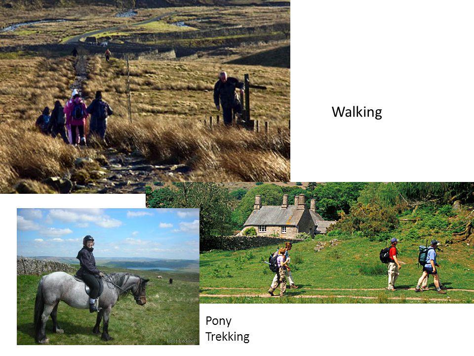 Walking Pony Trekking