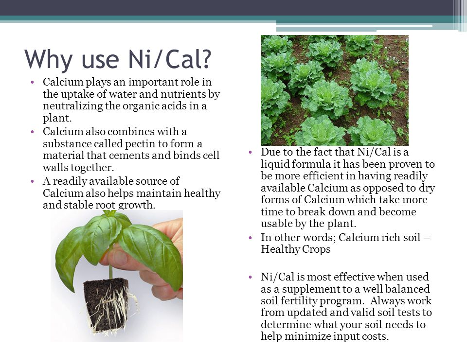 Why use Ni/Cal Calcium plays an important role in the uptake of water and nutrients by neutralizing the organic acids in a plant.