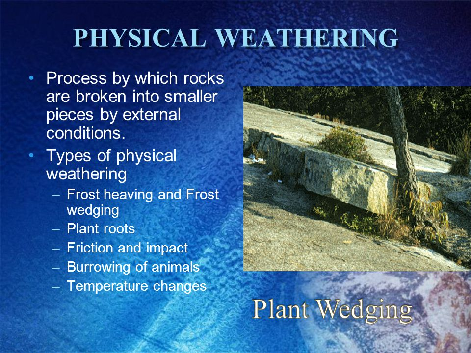 Plant Wedging PHYSICAL WEATHERING