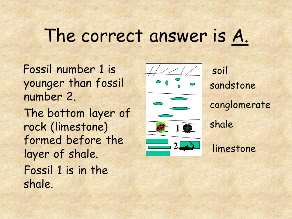 The correct answer is A. Fossil number 1 is younger than fossil number 2. The bottom layer of rock (limestone) formed before the layer of shale.