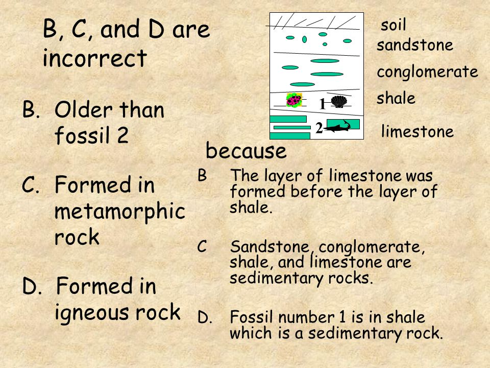 B, C, and D are incorrect Older than fossil 2