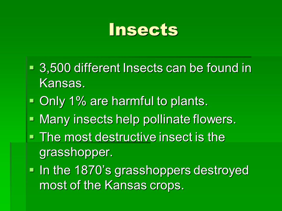 Insects 3,500 different Insects can be found in Kansas.