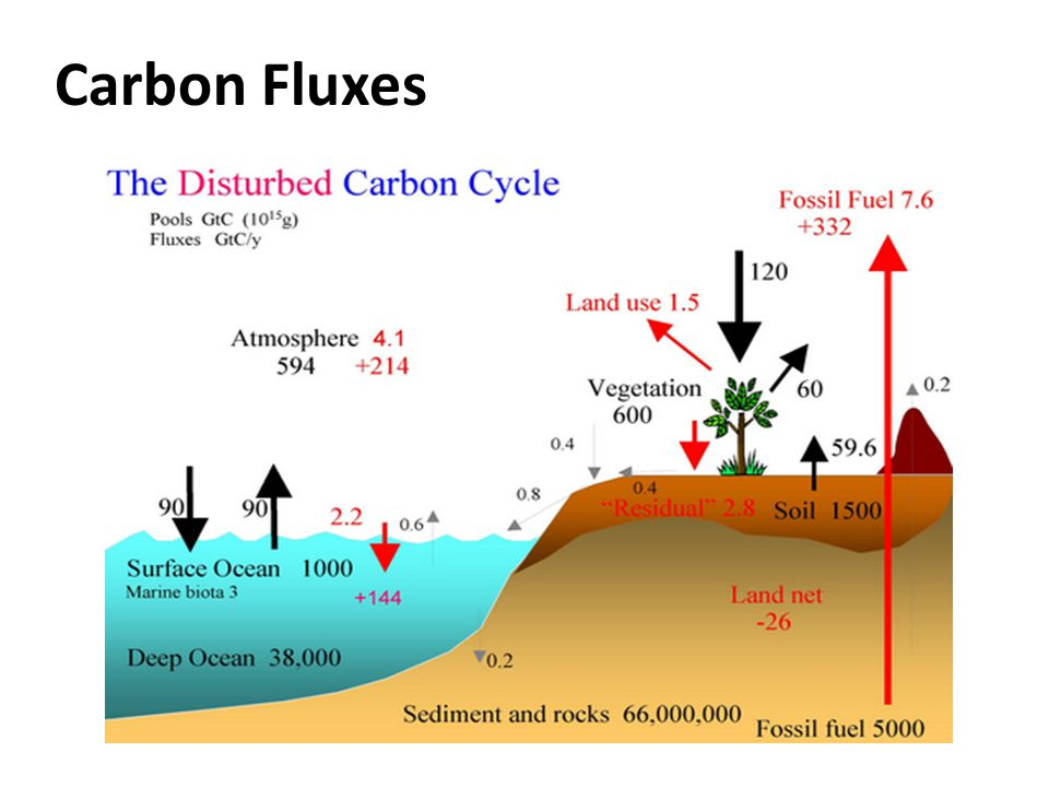 Carbon Fluxes