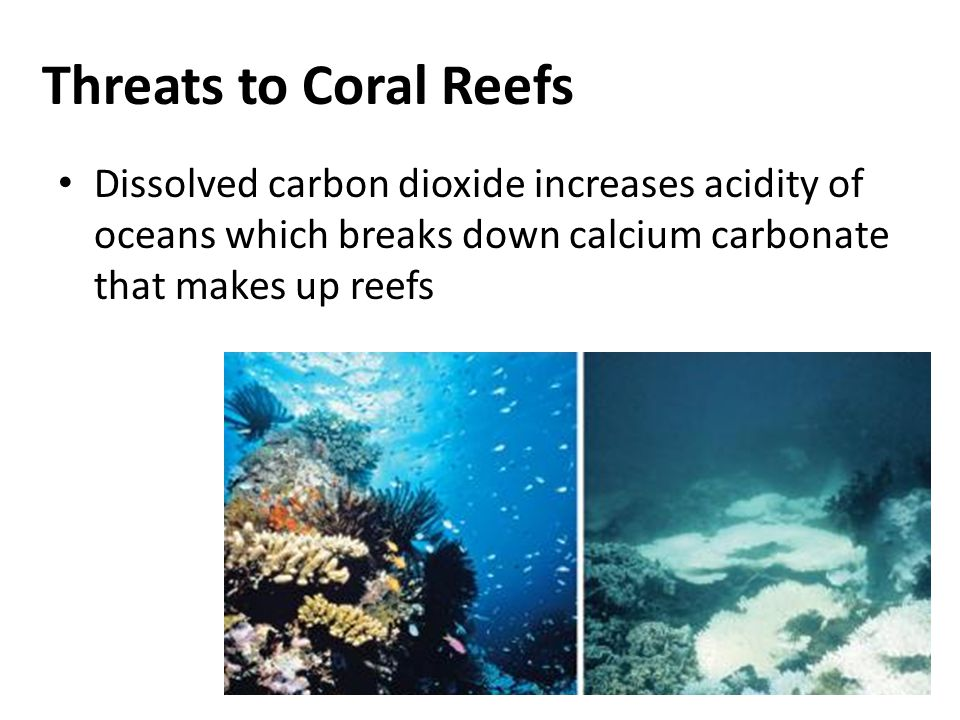 Threats to Coral Reefs Dissolved carbon dioxide increases acidity of oceans which breaks down calcium carbonate that makes up reefs.