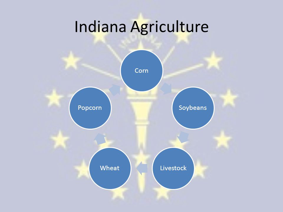 Indiana Agriculture Corn Soybeans Livestock Wheat Popcorn