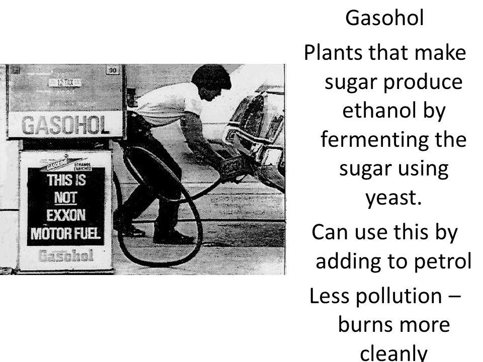 Gasohol Plants that make sugar produce ethanol by fermenting the sugar using yeast.