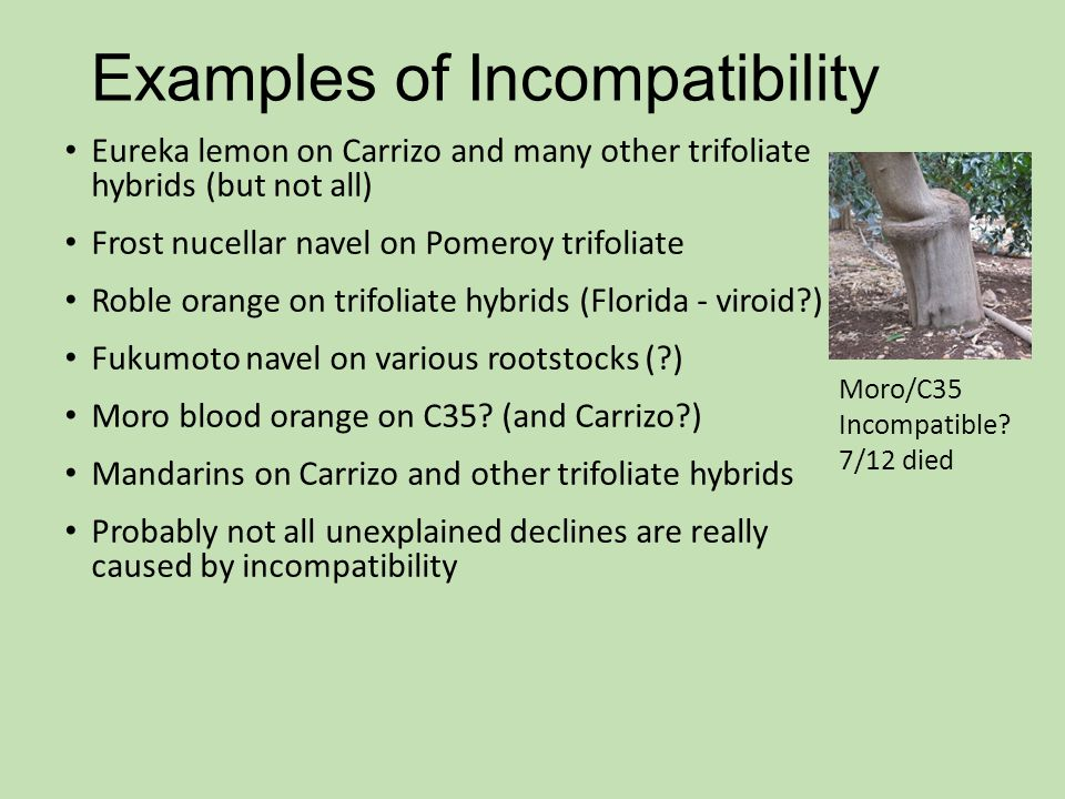 Examples of Incompatibility