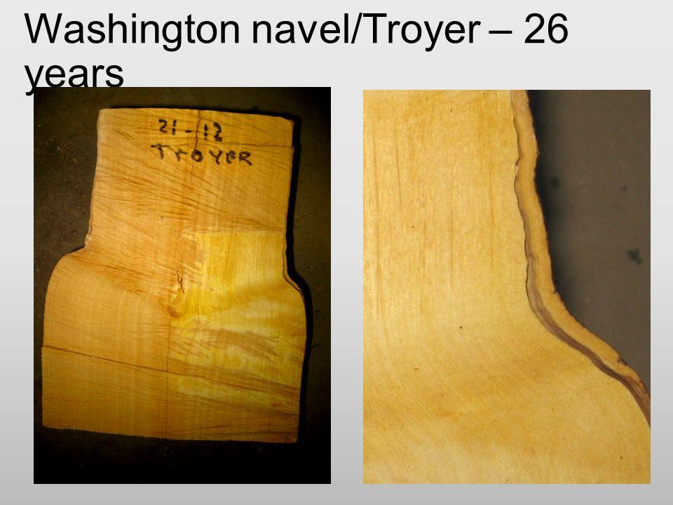 Washington navel/Troyer – 26 years