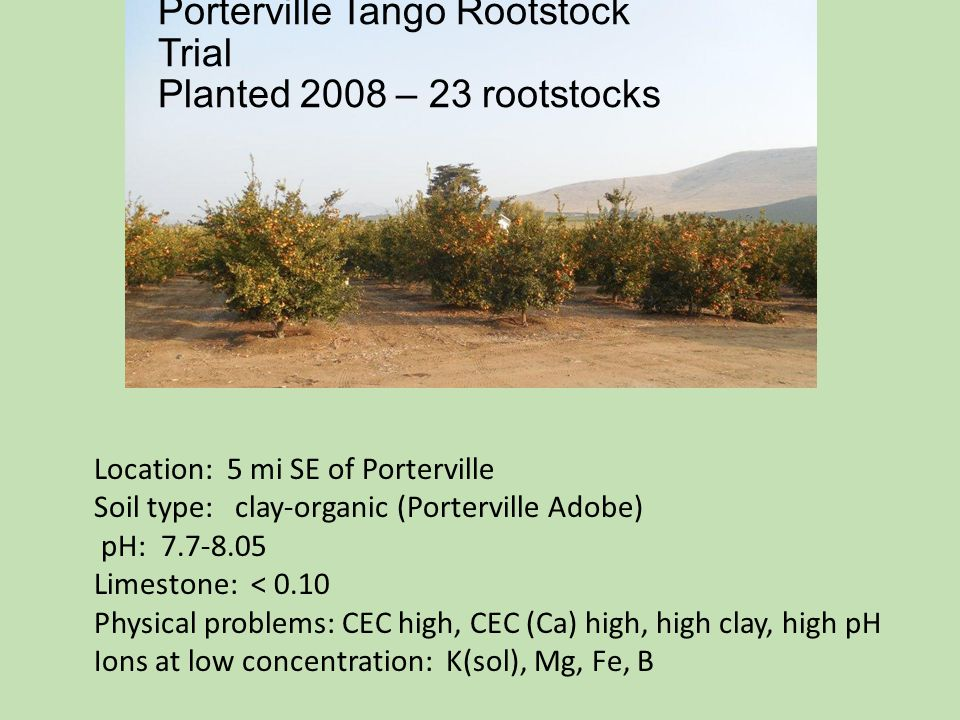 Porterville Tango Rootstock Trial Planted 2008 – 23 rootstocks