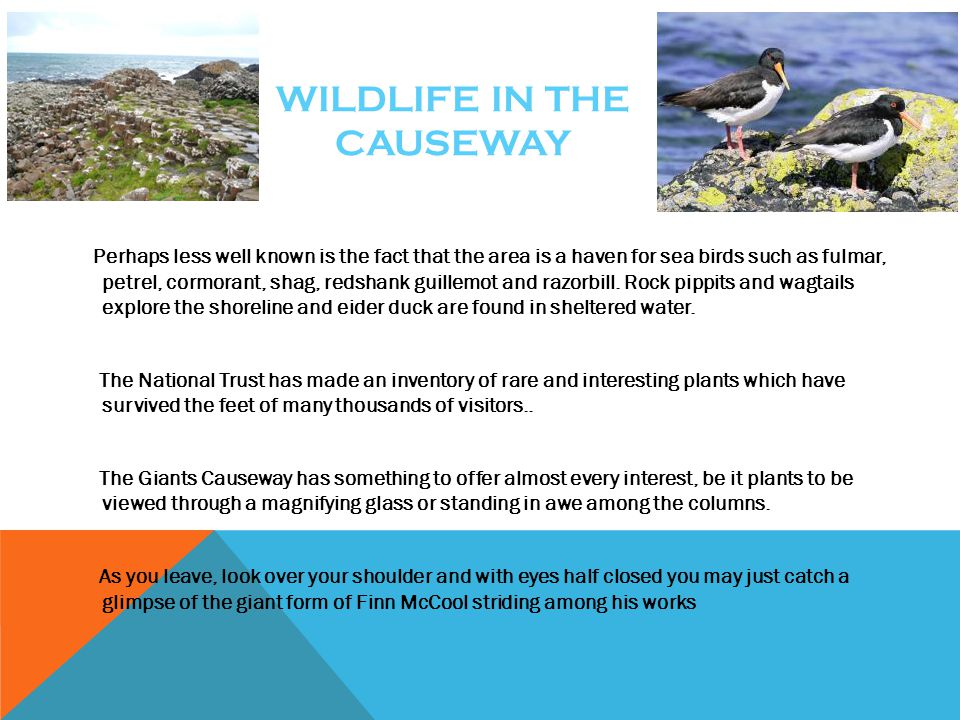 Wildlife in the causeway
