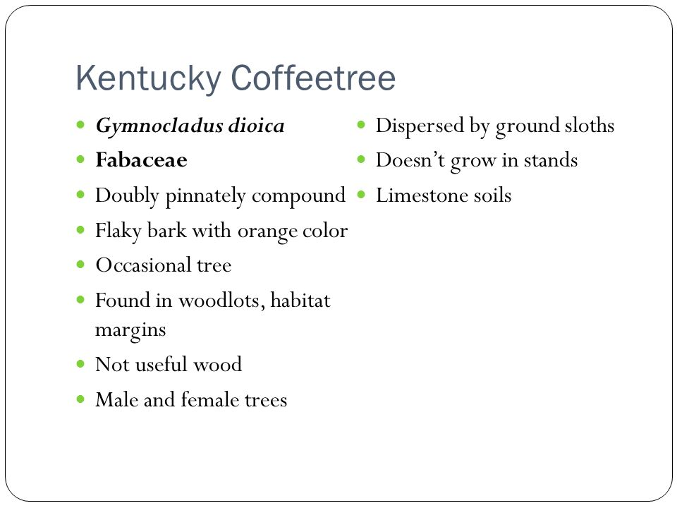 Kentucky Coffeetree Gymnocladus dioica Dispersed by ground sloths