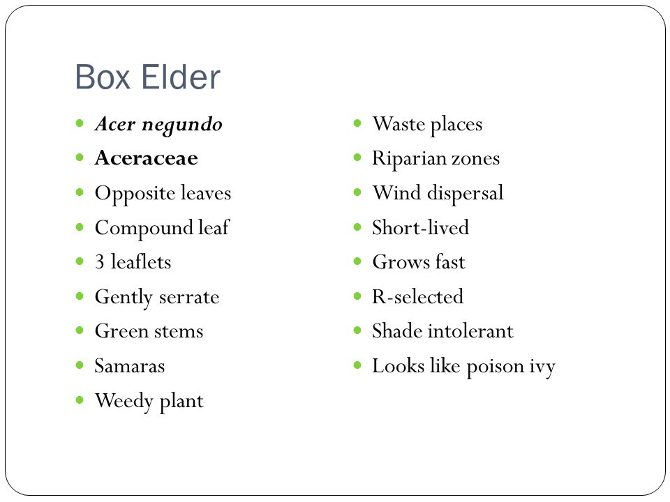 Box Elder Acer negundo Waste places Aceraceae Riparian zones