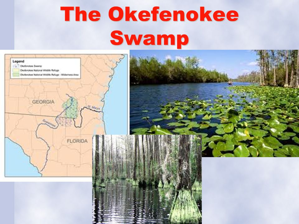 The Okefenokee Swamp