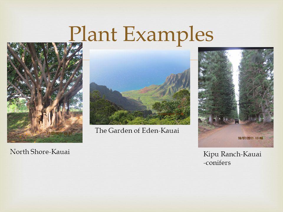 Plant Examples The Garden of Eden-Kauai North Shore-Kauai