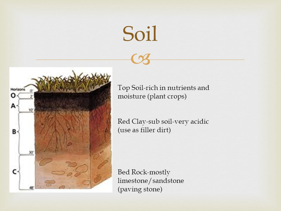 Soil Top Soil-rich in nutrients and moisture (plant crops)