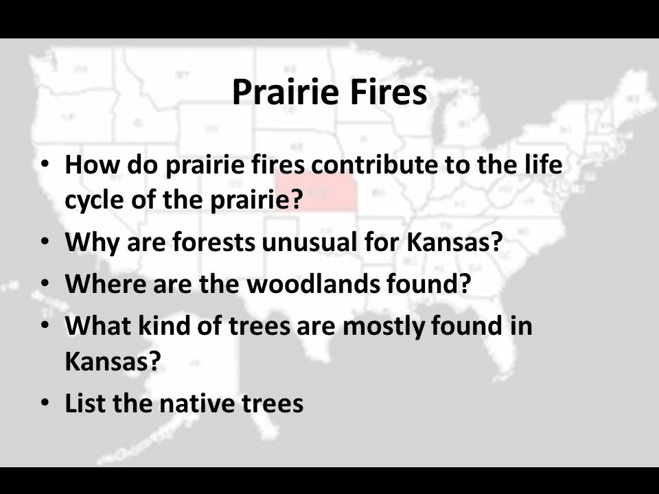 Prairie Fires How do prairie fires contribute to the life cycle of the prairie Why are forests unusual for Kansas