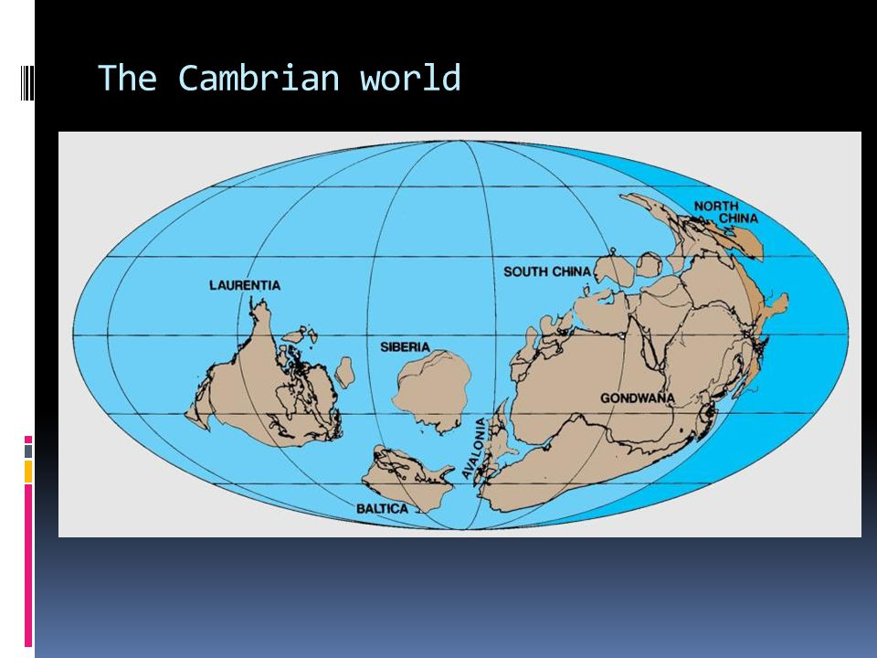The Cambrian world