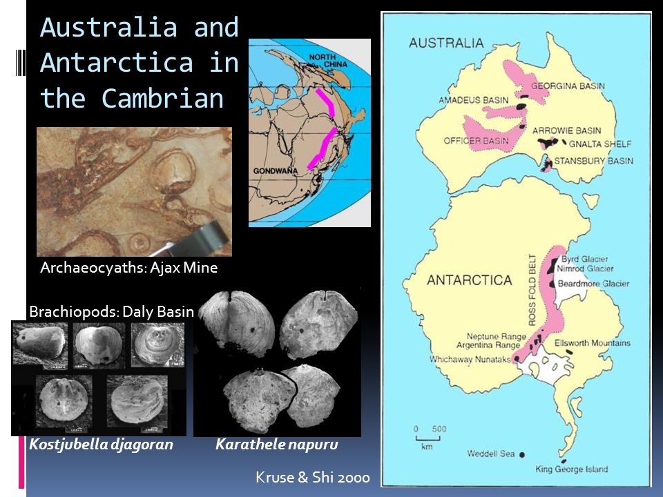 Australia and Antarctica in the Cambrian