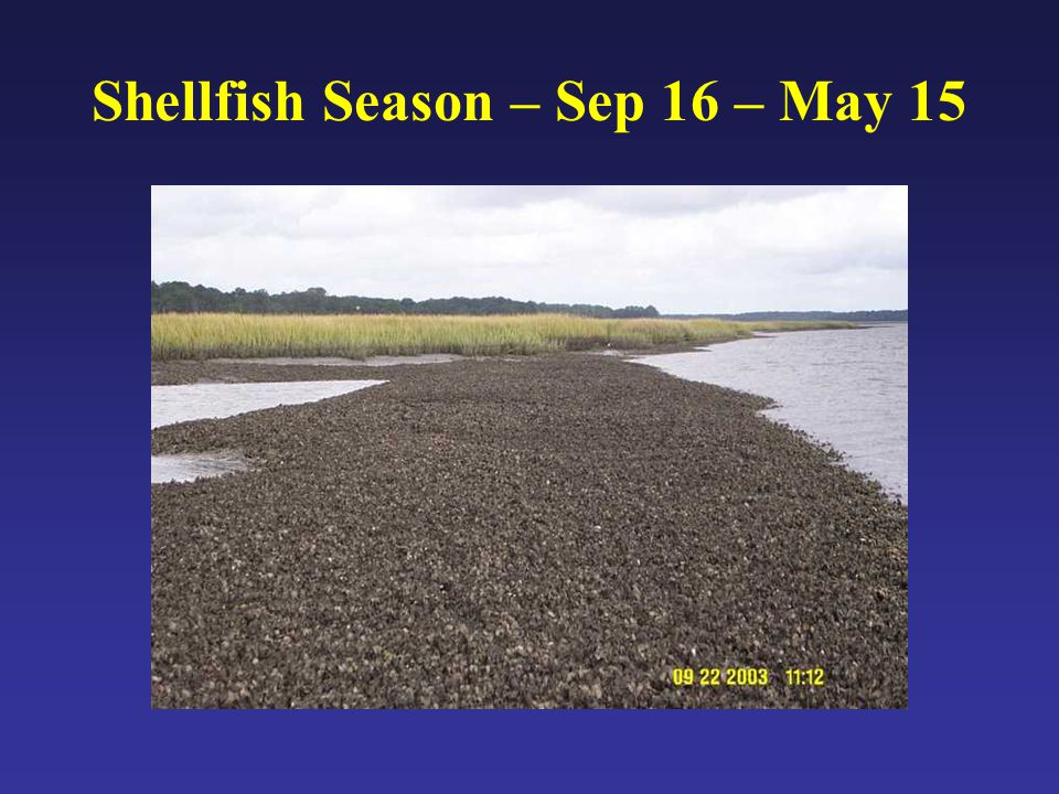 Shellfish Season – Sep 16 – May 15