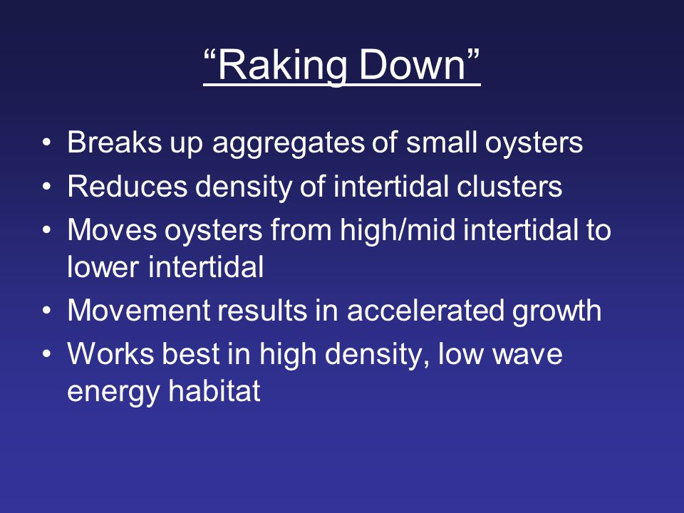 Raking Down Breaks up aggregates of small oysters