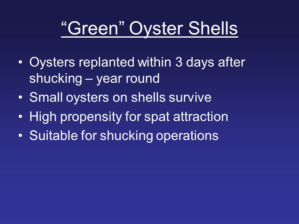 Green Oyster Shells Oysters replanted within 3 days after shucking – year round. Small oysters on shells survive.