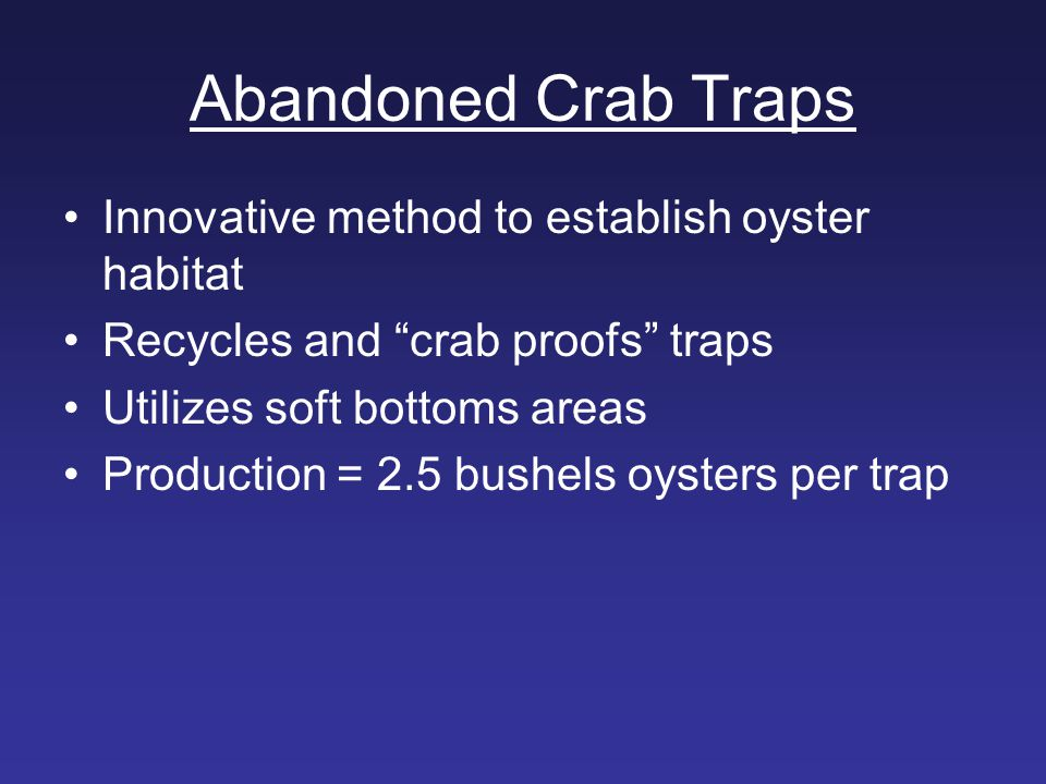Abandoned Crab Traps Innovative method to establish oyster habitat