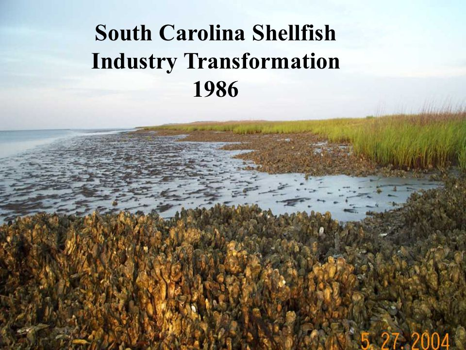 South Carolina Shellfish Industry Transformation