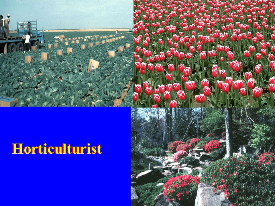 12. To the horticulturist it is a medium to grow vegetable crops, flowers, and ornamentals.