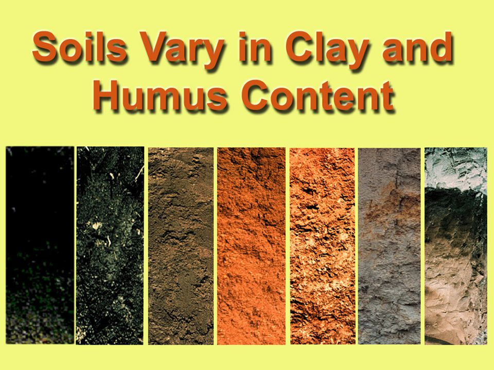 34. For example, what about the organic matter in the three soils on the left - high or low organic matter content Rank them.