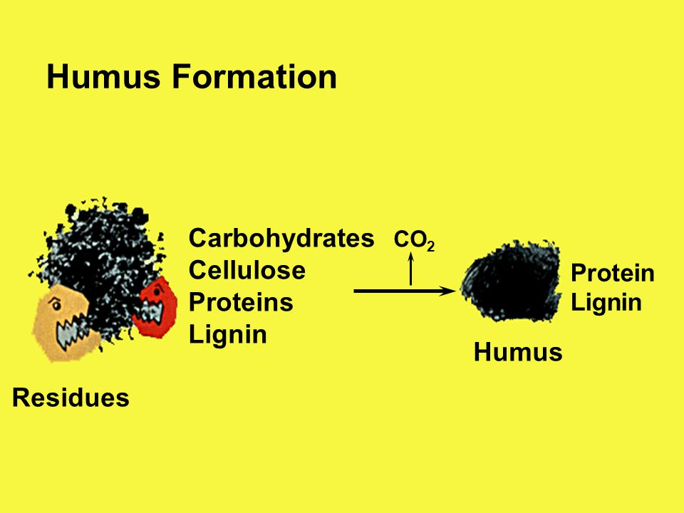 Humus Formation Carbohydrates Cellulose Proteins Lignin Humus Residues