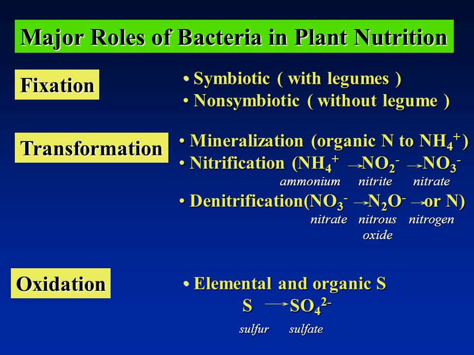 Major Roles of Bacteria in Plant Nutrition