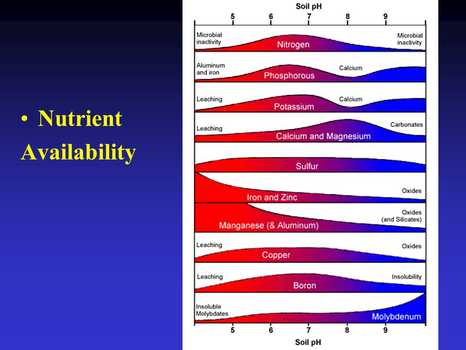 Nutrient Availability disk 10