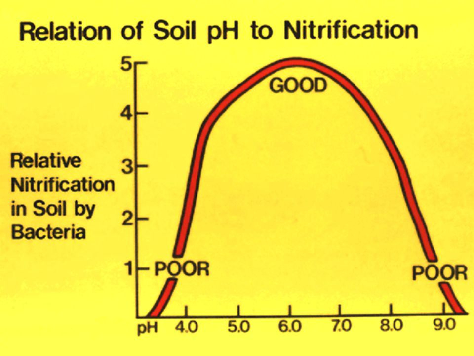 60. This slide shows the effect of soil pH on nitrification in soils by bacteria.