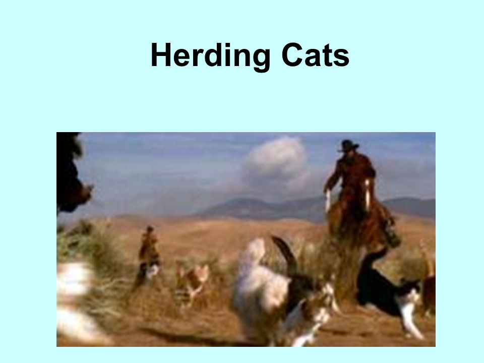 Herding Cats Coordination of many different groups or people