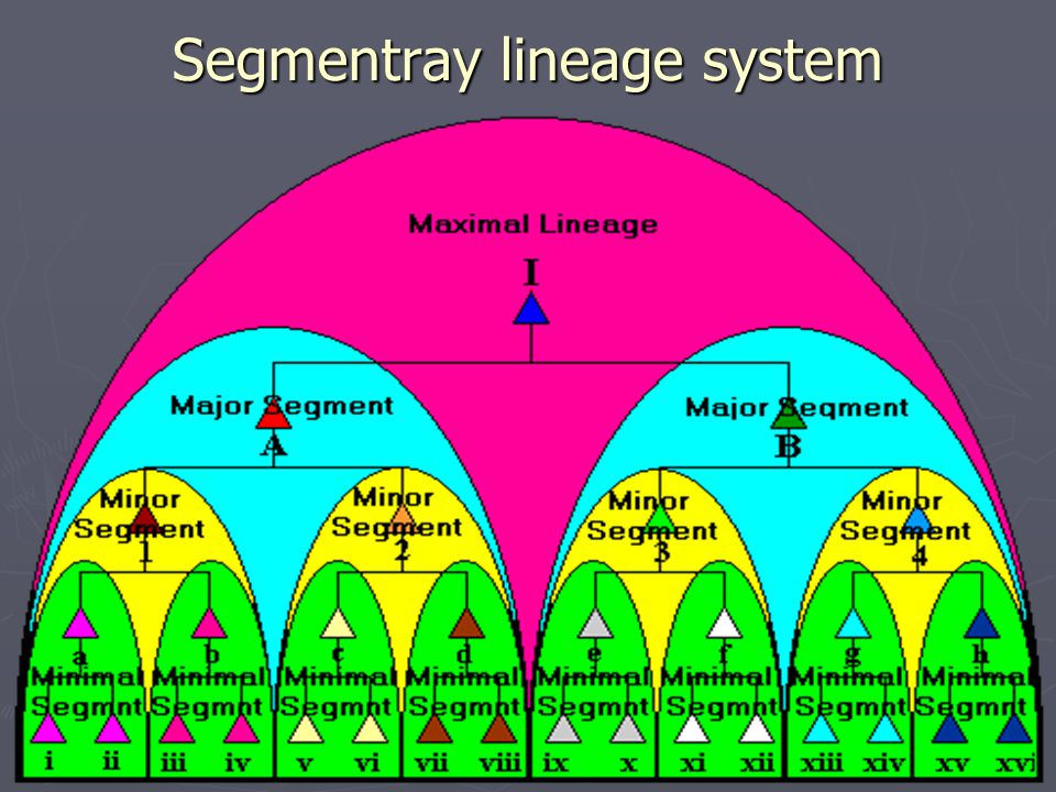 Segmentray lineage system