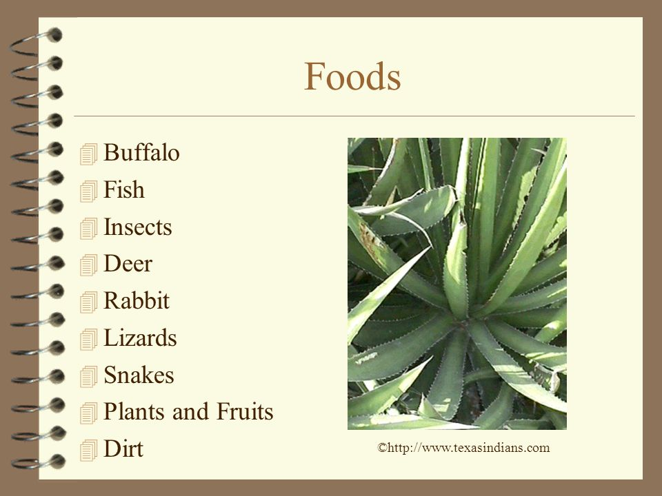 Foods Buffalo Fish Insects Deer Rabbit Lizards Snakes
