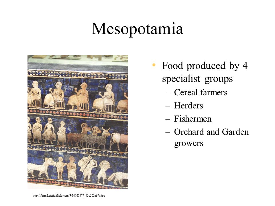 Mesopotamia Food produced by 4 specialist groups Cereal farmers
