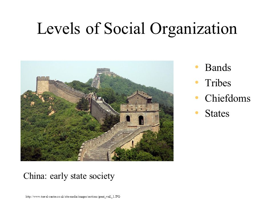 Levels of Social Organization