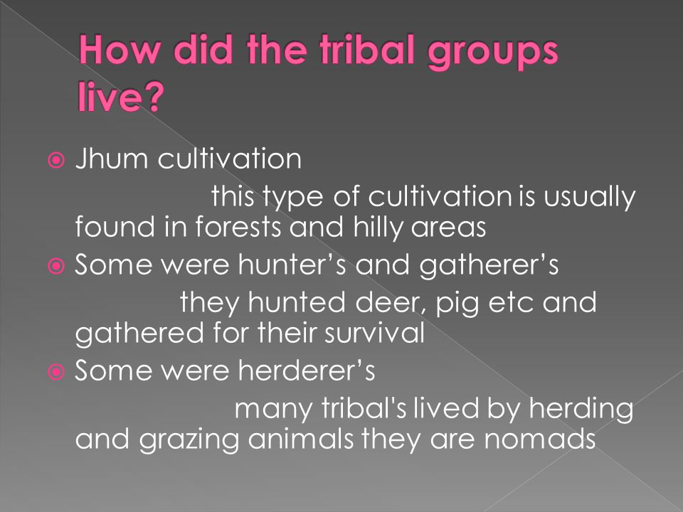 How did the tribal groups live