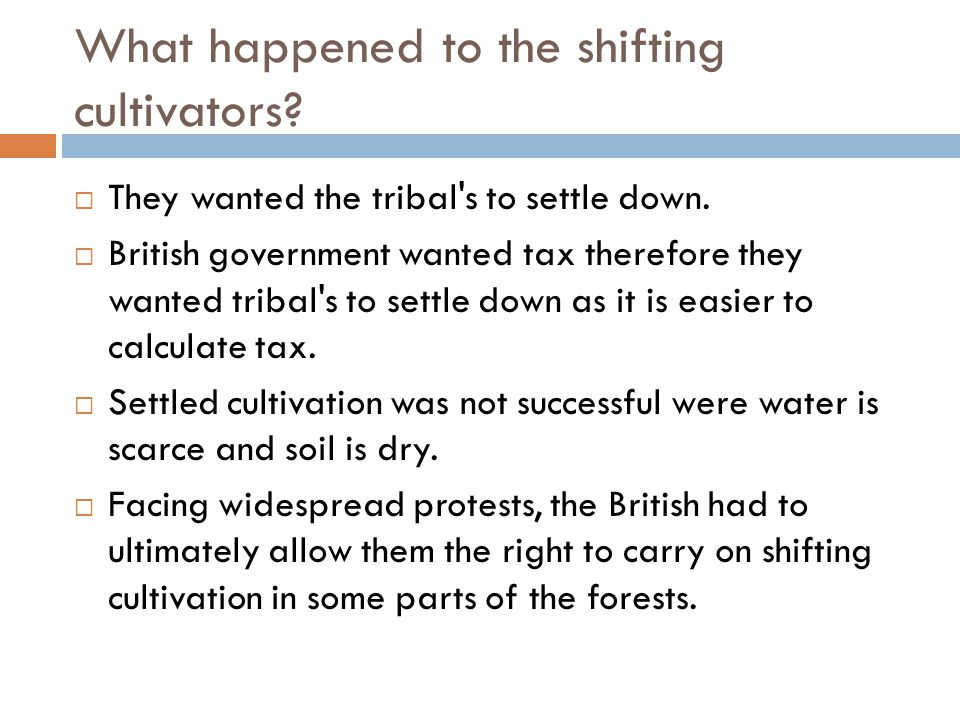 What happened to the shifting cultivators