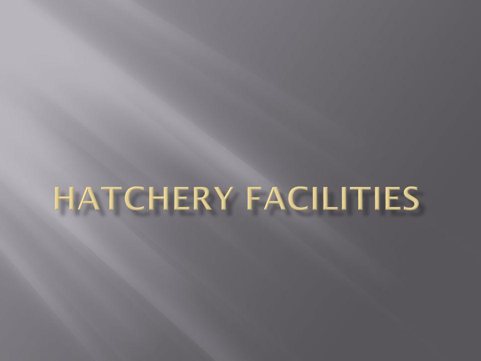 Hatchery Facilities
