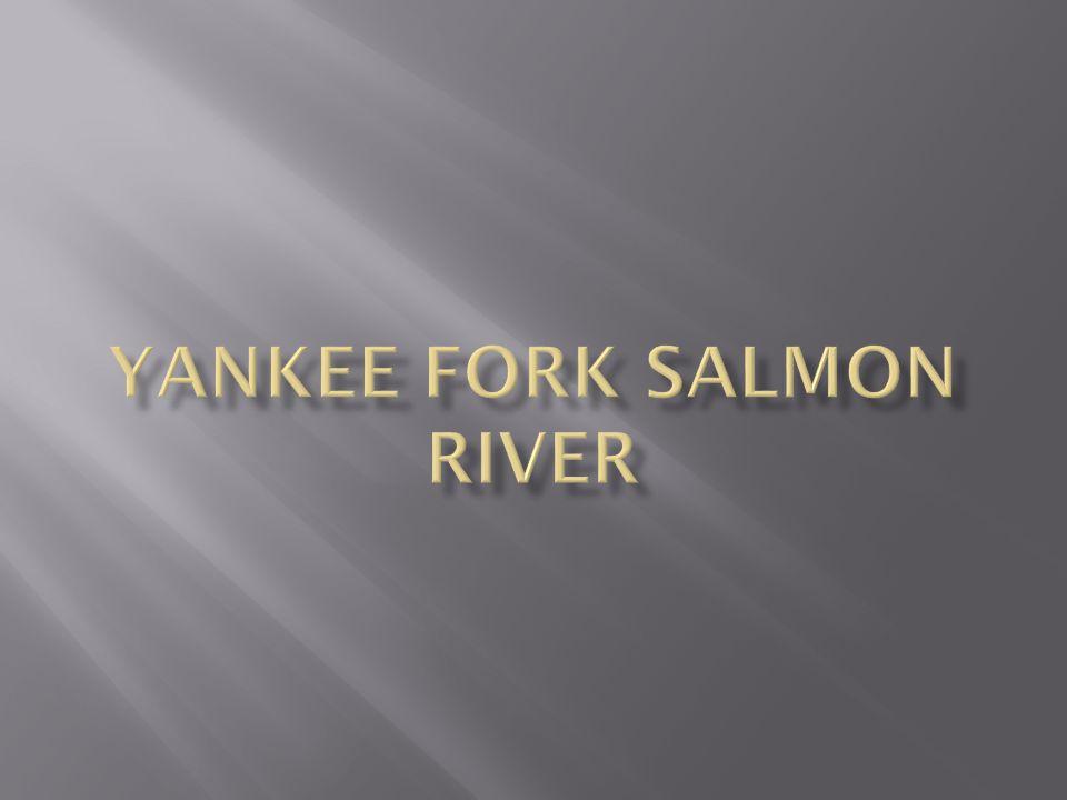 Yankee fork salmon river