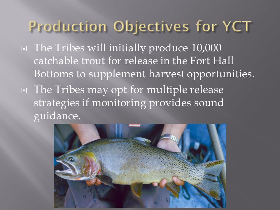 Production Objectives for YCT