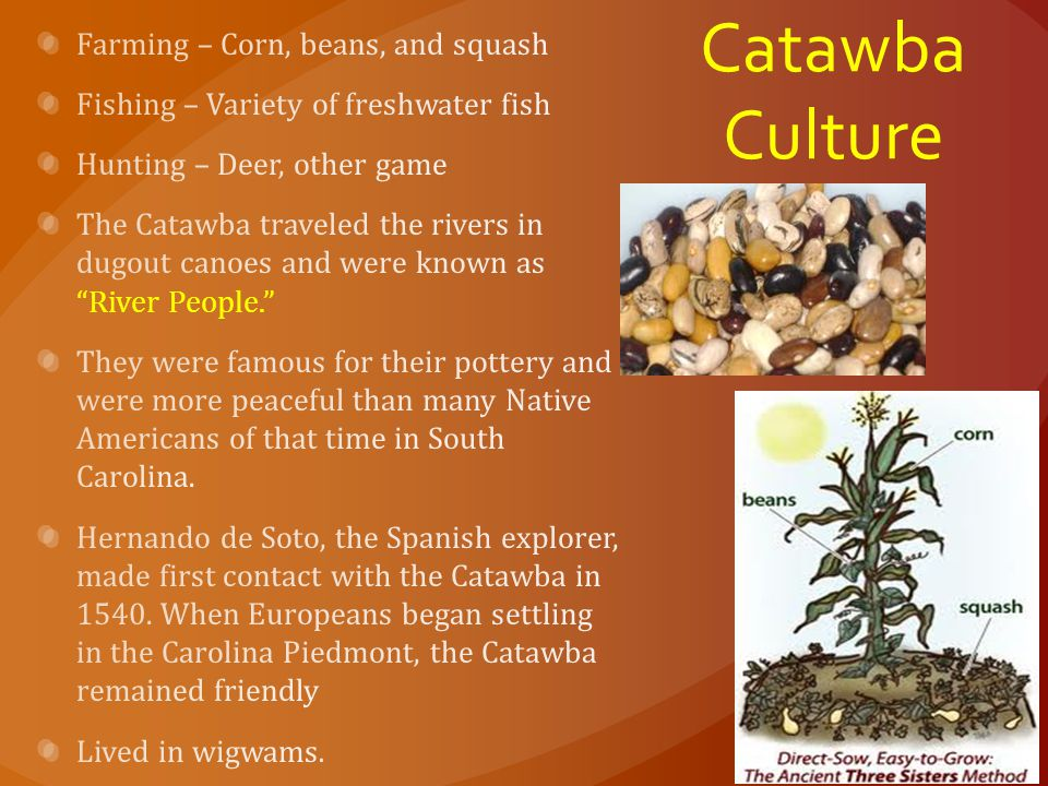 Catawba Culture Farming – Corn, beans, and squash
