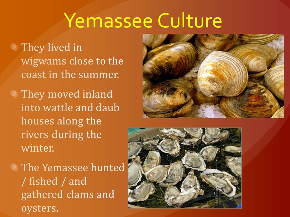 Yemassee Culture They lived in wigwams close to the coast in the summer.
