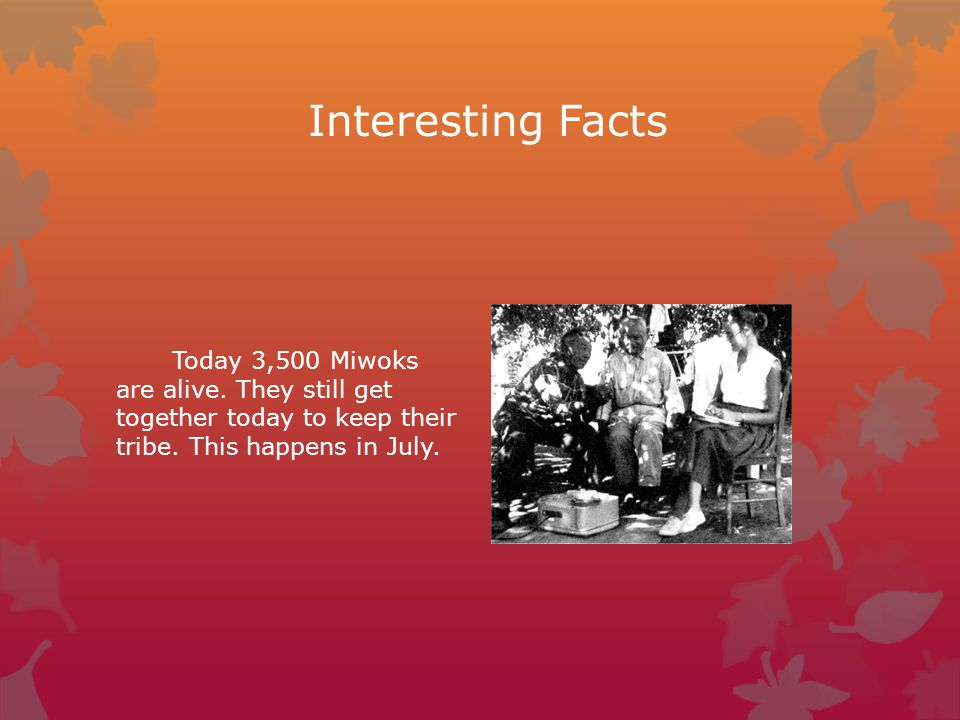 Interesting Facts Today 3,500 Miwoks are alive.