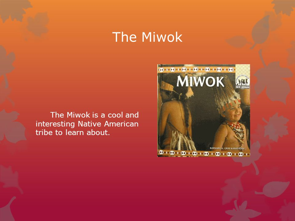 The Miwok The Miwok is a cool and interesting Native American tribe to learn about.
